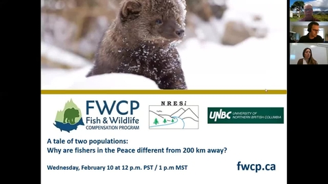Thumbnail for entry A tale of two populations - Why are fishers in the Peace different from 200 km away? - Rich Weir - BC Ministry of Environment and Climate Change Strategy - Feb 10 2021