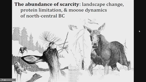 Thumbnail for entry The abundance of scarcity: landscape change, protein limitation, and moose population dynamics in north-central BC. Dr. Jeff Werner, BC Ministry of Forests, Lands, Natural Resource Operations, and Rural Development - October 18 2019